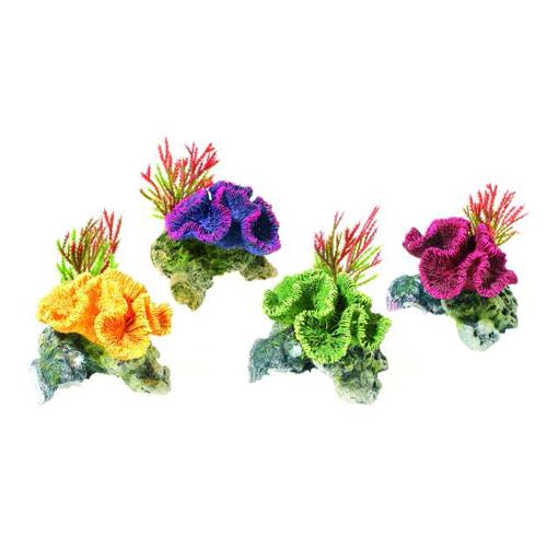 Coral Plantas